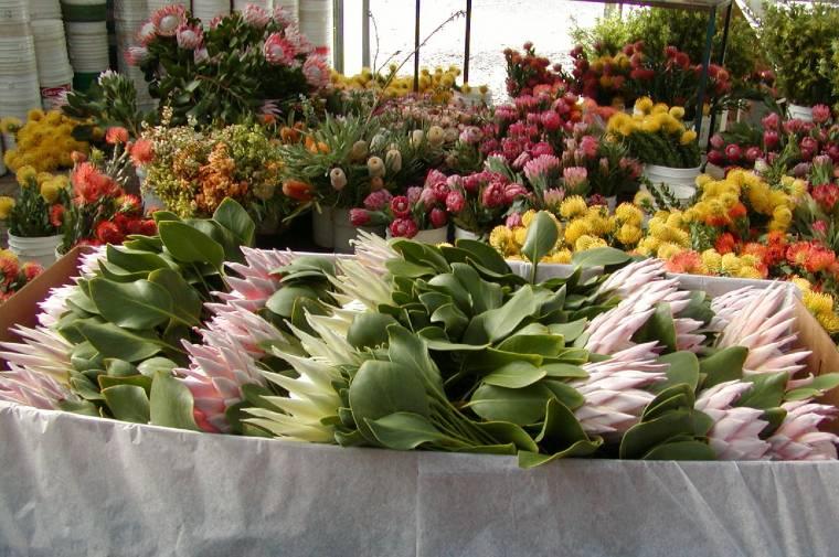 Resendiz boxed protea