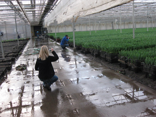 The JTV Crew stops in amazement to photograph thousands of soil grown tulips