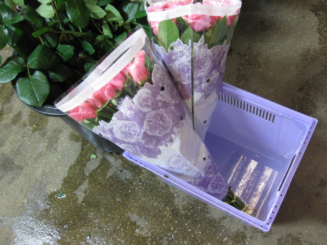 David Austin Roses Branded Packaging and the Lavender Parcona