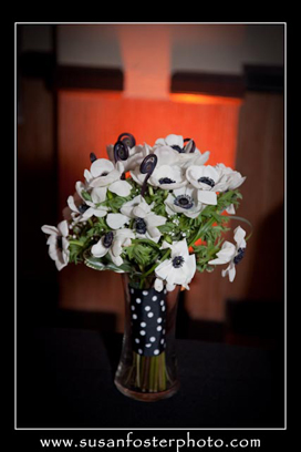 Anemone-White