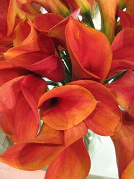 Calla-Orange