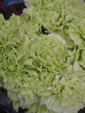 Carnation-Green