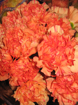 Carnation-Orange-Bicolor