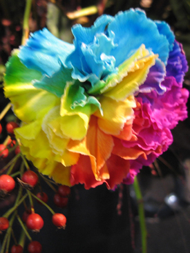 Carnation-Rainbow Dyed