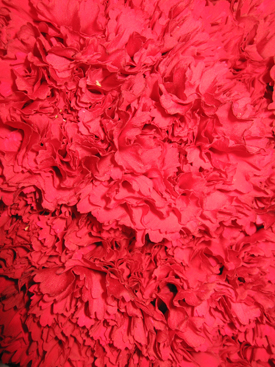 Carnation-Red2
