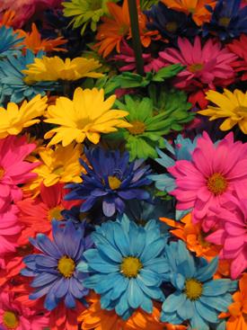 Chrysanthemum-Dyed Daisy PomPon