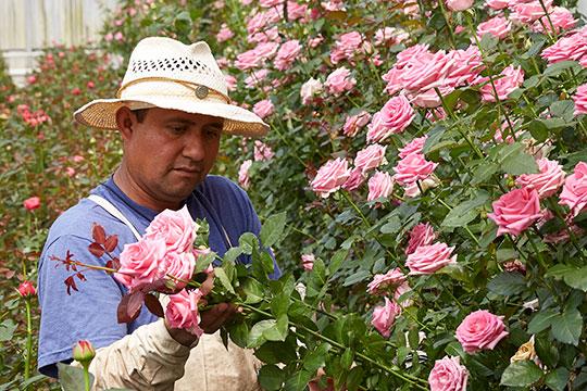 EufloriaFlowers_412-organic-pesticide-free-W