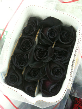 Rose Black Dyed
