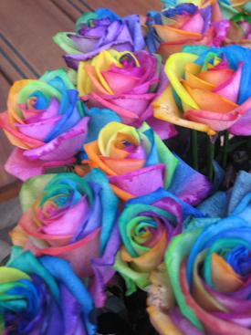 Rose-Rainbow-Happy Colors