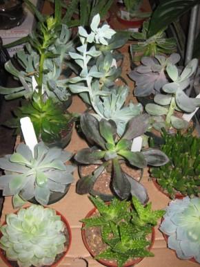 Succulents at Florist Supply LTD in Winnepeg!