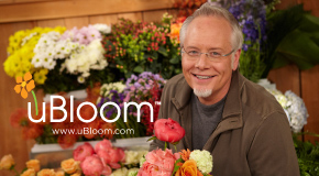Sharing the LOVE with uBloom Memberships and Christmas DVD's
