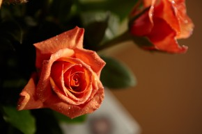"Tangerine Tango ""Chilies"" Roses... with a Micro Glitter Edge..."