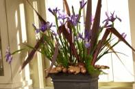 How to Create an Iris Field Arrangement