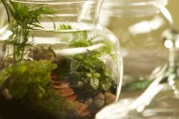 How to Make a Terrarium in a Lidded Glass Vase!