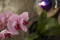 How to Care for your Orchid Plants and make an Orchid Table Centerpiece