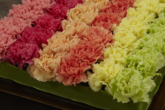 How to Create a Pave' of Carnations in a Tray
