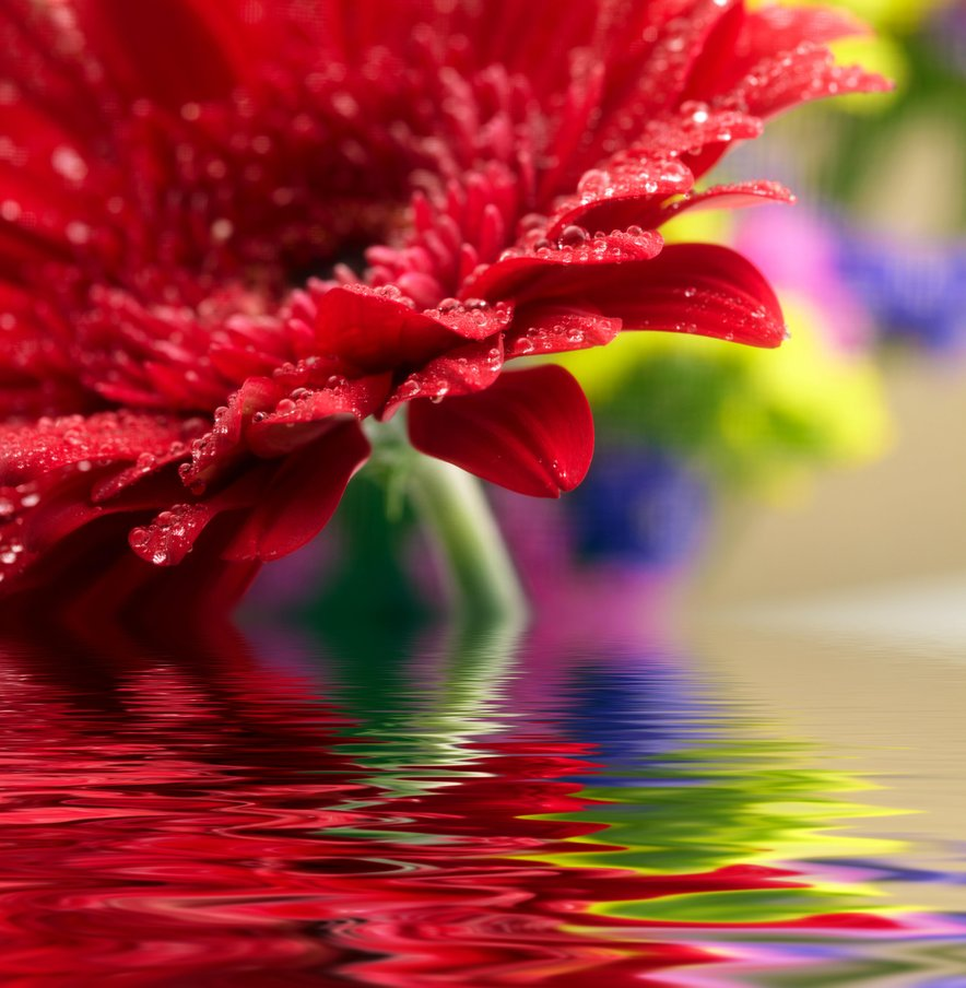 Is your water negatively affecting your cut flowers?