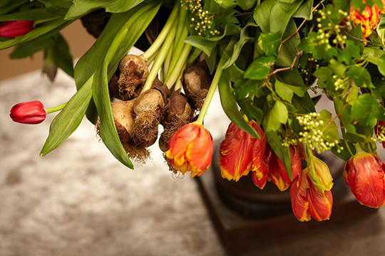 How to Create an Arrangement with Tulips On the Bulb