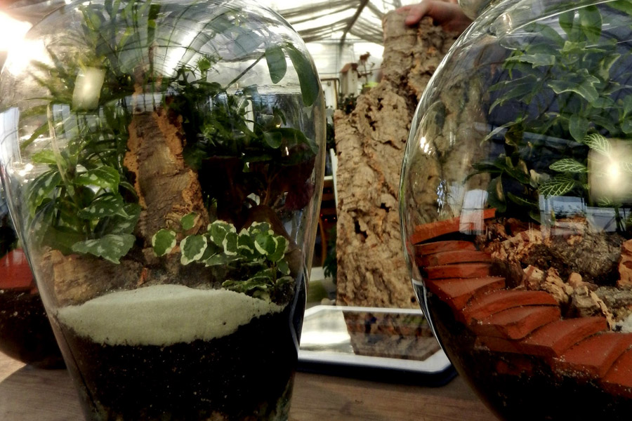 TerraGlas Containers are perfect for creating Terrariums!