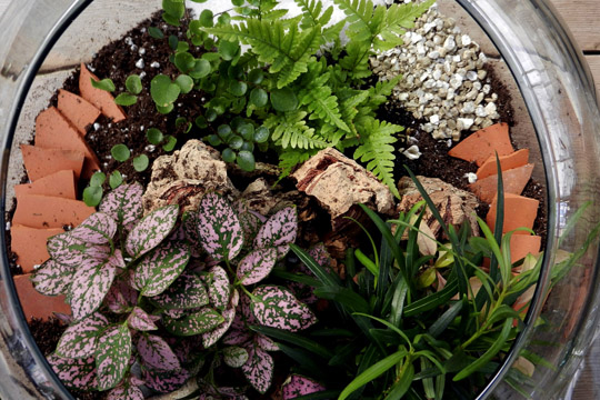 How to arrange flowers- Making Terrariums
