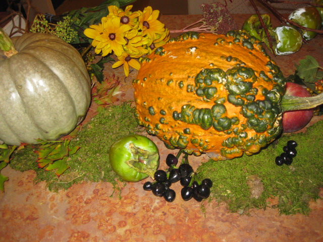 """Warty"" or Green Pumpkins are popular Heirloom Varieties showing up all across the USA!"