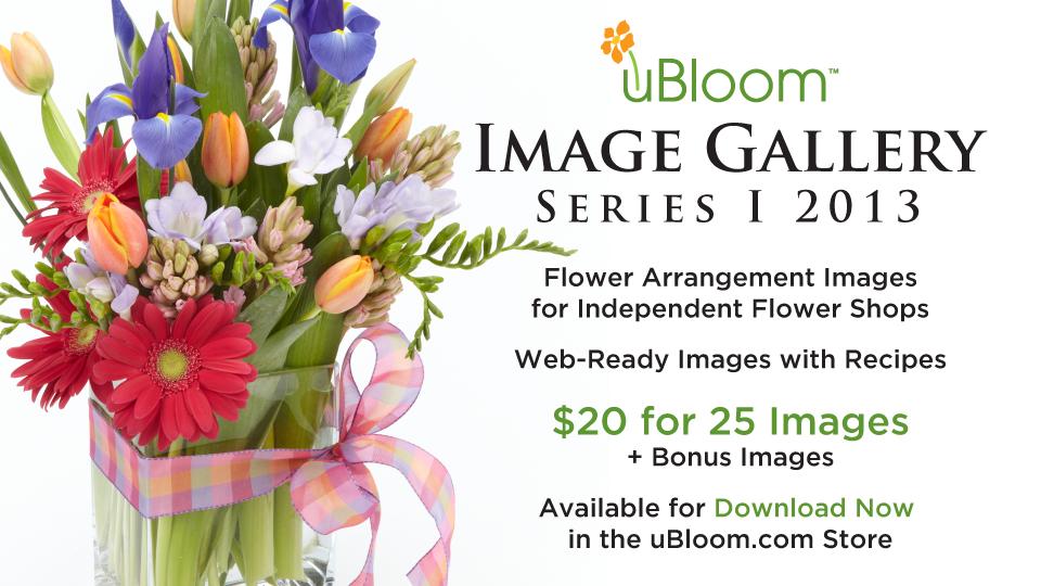 ImageGallerySeries1-2013
