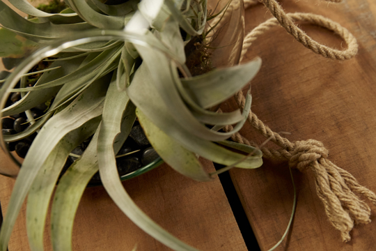 How to arrange flowers- Air Fern (Tillandsia) Hanging Terrarium