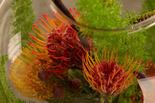 How to arrange flowers_Protea Bubble Bowl