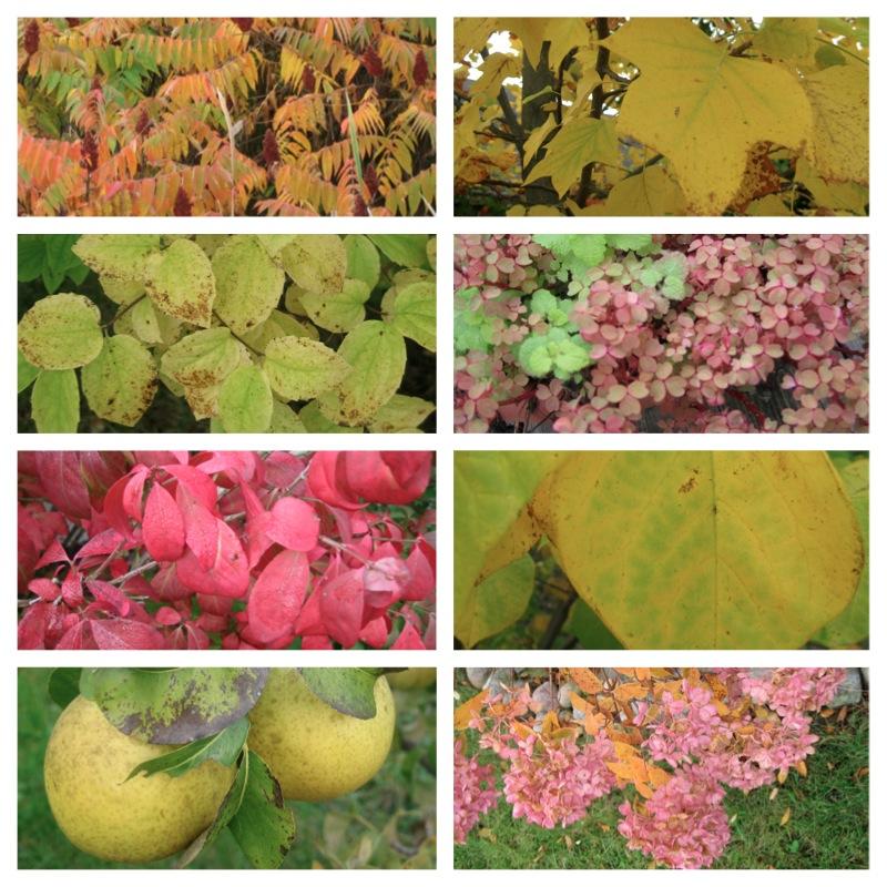 Fall Colors- Pure Michigan!