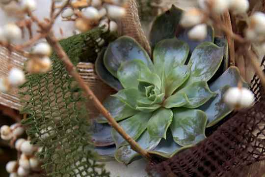 How to arrange flowers_Corn Husk Wreath with Cotton and Succulents