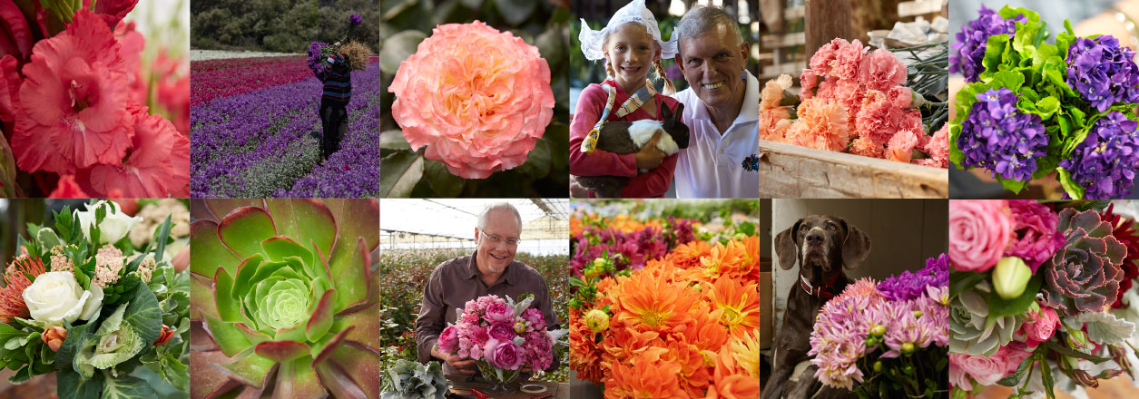 The CA Grown Experience on uBloom- is a documentary series- that showcases the Flower Farms, Growers, and Flower Wholesalers in the State of California!