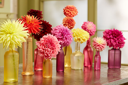 How to Arrange Flowers_Colorful Bottle Collection with Dahlias
