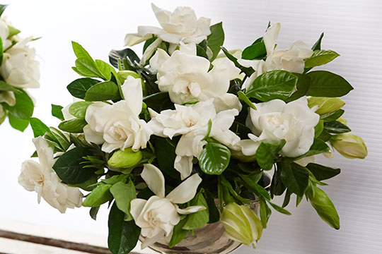 How to Arrange Flowers_Stemmed Gardenias!
