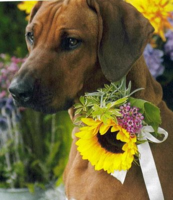 Wedding flowers for Fido