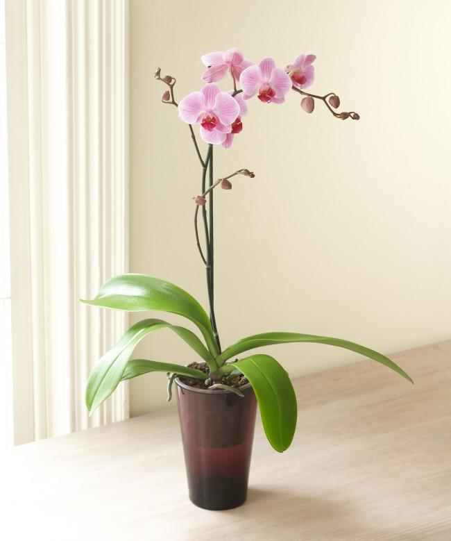 Tips for Good Orchids!