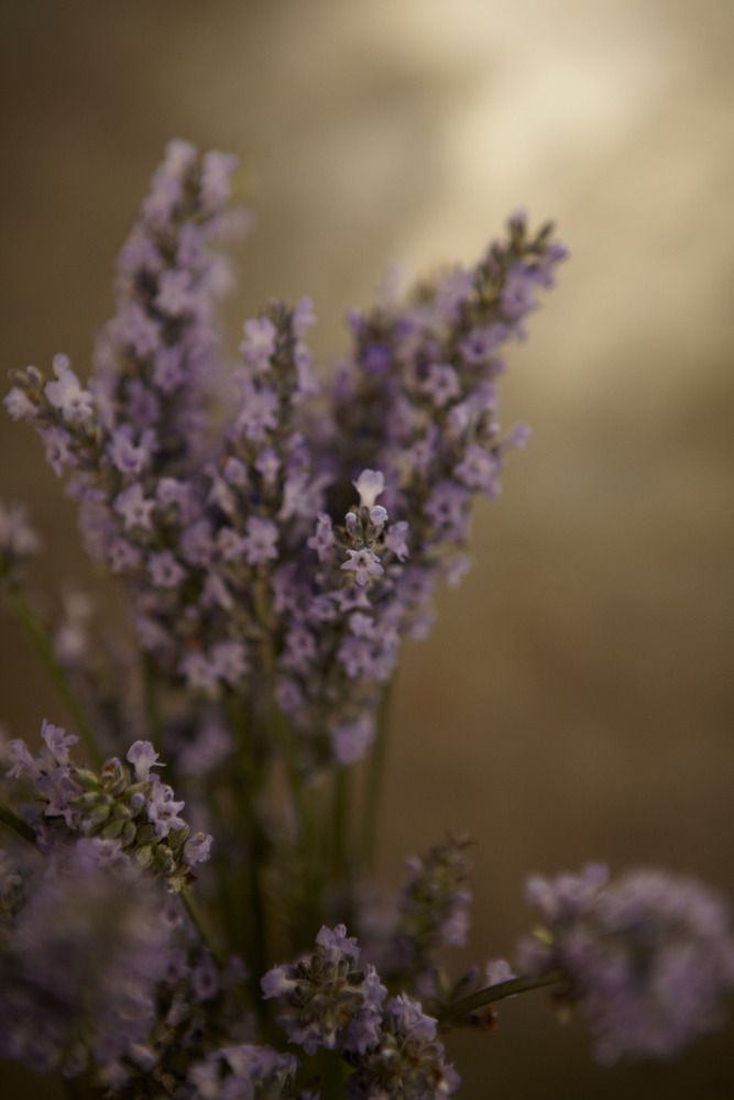 Keep some Lavender availalbe.