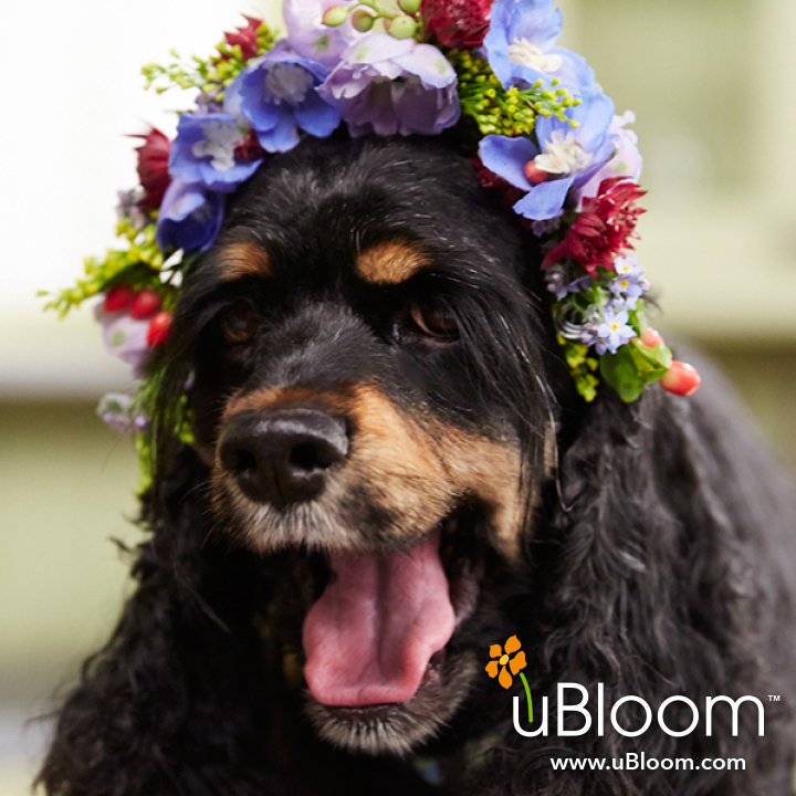 Flower Dogs- Crowning Achievement!