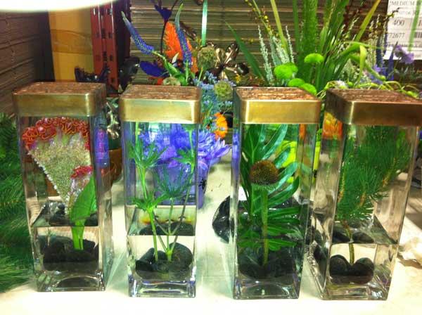 Flower curiosities