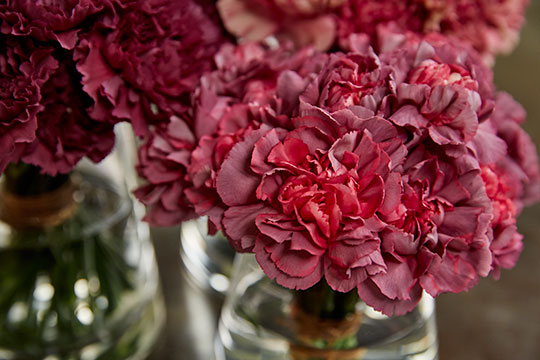 Imperial Carnation Break-away Centerpieces