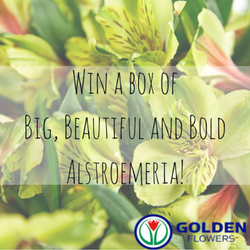 Win Free Alstro from Golden