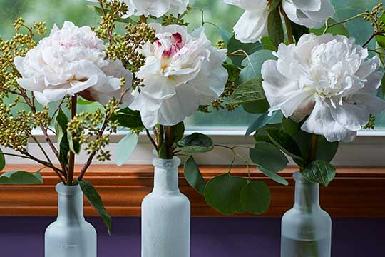 Frosted Vases with Peonies and Eucalyptus!
