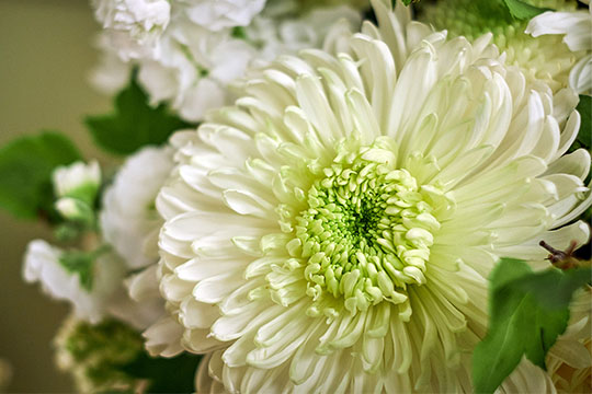 Magnum Chrysanthemum Wedding Bouquet!