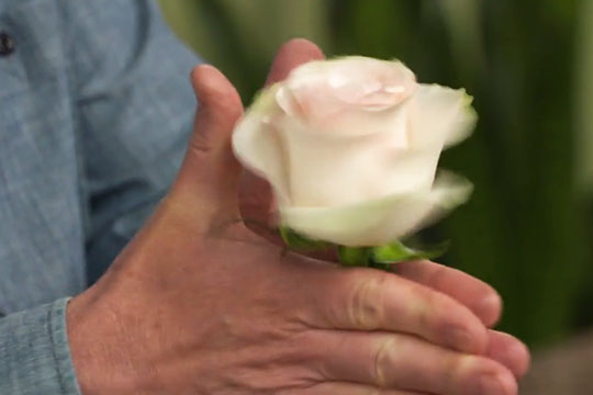 Mechanics Monday - Gentle ways to open your roses