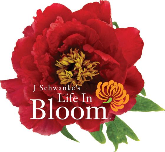 Emotional Impact of Flowers