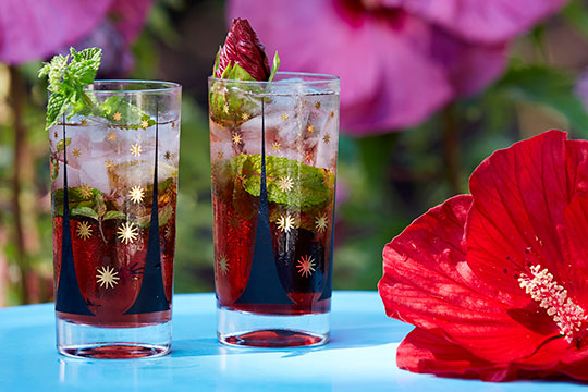 J shows how to create a Hibiscus Mojito - perfect for a Flower Cocktail Hour