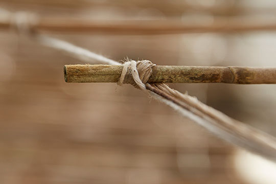 Each bamboo support in the Akiyama Greenhouse was tied in by hand- by either Ben or his Father... Millions!