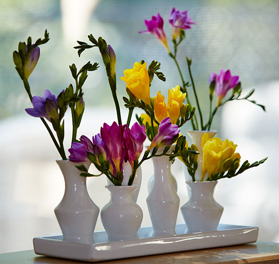Several Different Varieties of Freesia in Different colors - on J Schwanke's Life in Bloo