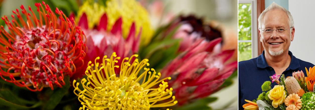 J Schwanke's Life in Bloom explores the prehistoric protea