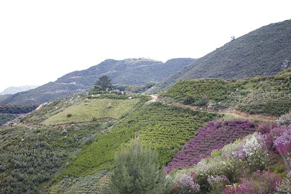 Resendiz Mountain Farm