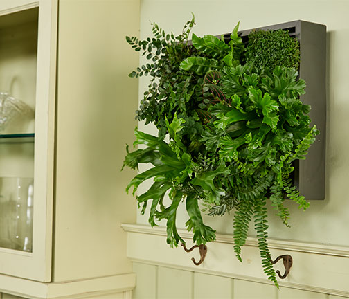 J shows how to plant a wall planter for living green art on Life in Bloom!